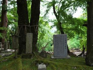 岩間寺境内の夫婦桂標識の写真素材 [FYI04314149]