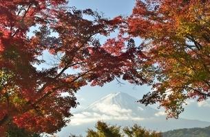 河口湖の紅葉した紅葉と富士山の写真素材 [FYI04314166]