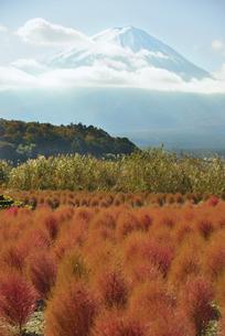大石公園のコキアと富士山の写真素材 [FYI04314169]