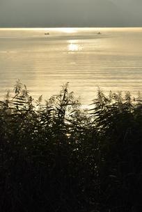 朝日に染まる湖面と葦とボートの写真素材 [FYI04314180]