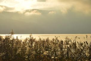 朝日に染まる湖面と葦とボートの写真素材 [FYI04314183]