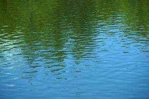 水面に映る木々の写真素材 [FYI04314743]