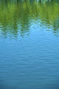 水面に映る木々の写真素材 [FYI04314744]