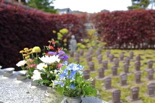 樹木葬の写真素材 [FYI04315041]