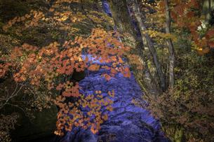 日光の紅葉と川の写真素材 [FYI04315152]