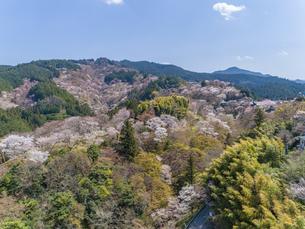 世界遺産吉野山中千本の桜 空撮の写真素材 [FYI04315157]