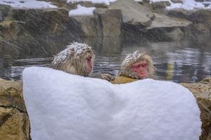 地獄谷温泉の猿の写真素材 [FYI04315161]