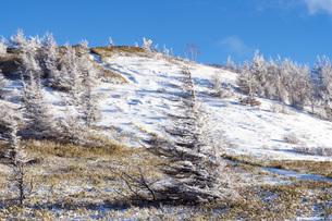 冬の美ヶ原、雪景色と青空の写真素材 [FYI04315240]