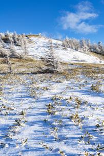 冬の美ヶ原、雪景色と青空の写真素材 [FYI04315241]