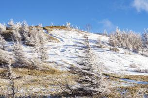 冬の美ヶ原、雪景色と青空の写真素材 [FYI04315242]