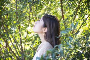 木々の中にいる女性の横顔の写真素材 [FYI04315965]