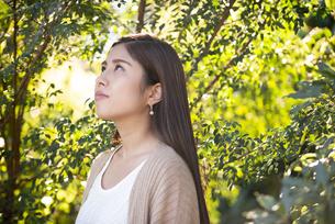 木々の中にいる女性の写真素材 [FYI04315967]