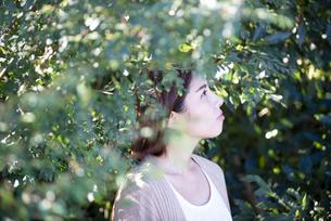 木々の中にいる女性の横顔の写真素材 [FYI04315969]