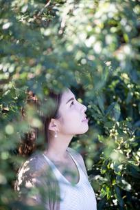 木々の中にいる女性の横顔の写真素材 [FYI04315970]