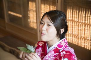 柏餅を食べている着物姿の女性の写真素材 [FYI04316091]