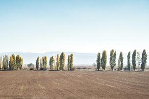 遠くに霞む山並みを見る農地とポプラ並木の写真素材 [FYI04316170]