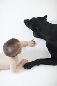 赤ちゃんと黒い犬の写真素材 [FYI04316307]