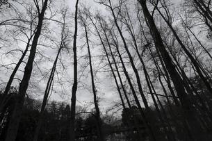 冬の雑木林の写真素材 [FYI04316736]
