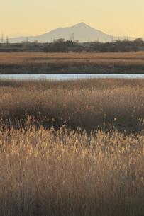 早朝の筑波山と渡良瀬遊水地の写真素材 [FYI04316742]