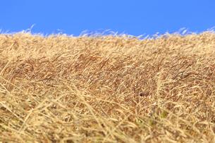 冬枯れの草原の写真素材 [FYI04316754]