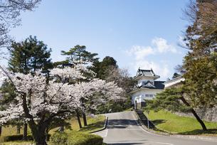 仙台城大手門脇櫓と桜の写真素材 [FYI04317343]