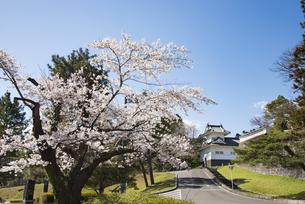 仙台城大手門脇櫓と桜の写真素材 [FYI04317345]