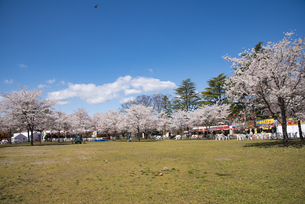 仙台市西公園の桜の写真素材 [FYI04317347]