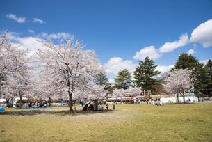 仙台市西公園の桜の写真素材 [FYI04317352]