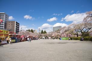 仙台市榴岡公園の桜の写真素材 [FYI04317368]