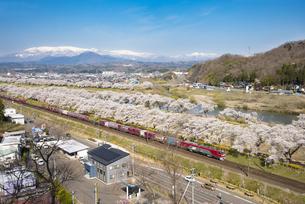 白石川堤千本桜と蔵王連峰と貨物列車の写真素材 [FYI04317391]