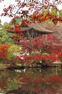 11月 紅葉の長岳寺-大和の紅葉-の写真素材 [FYI04317426]