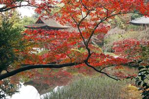 11月 紅葉の長岳寺-大和の紅葉-の写真素材 [FYI04317431]