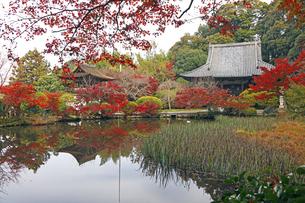 11月 紅葉の長岳寺-大和の紅葉-の写真素材 [FYI04317433]