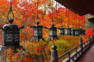 11月 紅葉の談山(たんざん)神社-大和の秋景色-の写真素材 [FYI04317450]