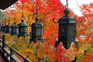 11月 紅葉の談山(たんざん)神社-大和の秋景色-の写真素材 [FYI04317451]