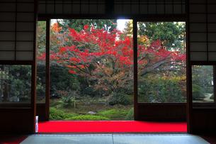 11月 雲竜院 -京都泉涌寺の別院-の写真素材 [FYI04317454]