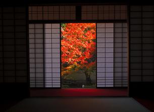 11月 雲竜院 -京都泉涌寺の別院-の写真素材 [FYI04317455]