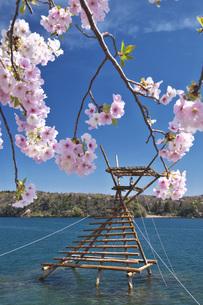 ボラ待ちやぐらと桜の写真素材 [FYI04317554]