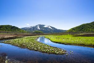 初夏の尾瀬ヶ原と至仏山の写真素材 [FYI04317805]
