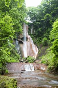 新緑に囲まれた嫗仙の滝の写真素材 [FYI04317890]