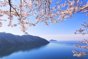 桜咲く奥琵琶湖パークウェイより葛籠尾崎と竹生島を望むの写真素材 [FYI04317901]