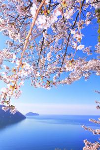 桜咲く奥琵琶湖パークウェイより葛籠尾崎と竹生島を望むの写真素材 [FYI04317902]