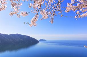 桜咲く奥琵琶湖パークウェイより葛籠尾崎と竹生島を望むの写真素材 [FYI04317903]