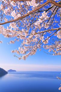 桜咲く奥琵琶湖パークウェイより葛籠尾崎と竹生島を望むの写真素材 [FYI04317904]