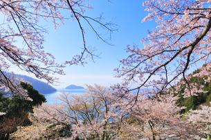 桜咲く奥琵琶湖パークウェイより葛籠尾崎と竹生島を望むの写真素材 [FYI04317906]