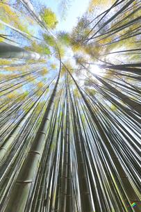 竹林と空に太陽の写真素材 [FYI04317907]