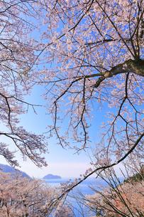 桜咲く奥琵琶湖パークウェイより葛籠尾崎と竹生島を望むの写真素材 [FYI04317908]
