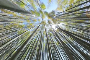 竹林と空に太陽の写真素材 [FYI04317910]