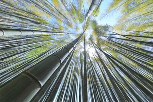 竹林と空に太陽の写真素材 [FYI04317911]