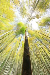 竹林に竹の子と空に太陽の写真素材 [FYI04317913]